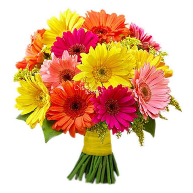 Свадебных, купить цветы герберы в новосибирске